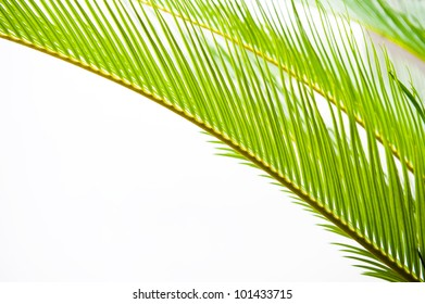 detail of green palm tree leaves texture.