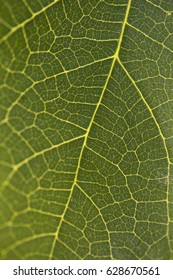 Detail of a green plant
