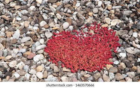 detail of green roof with red leaved stone crops on pebbles