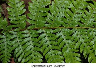 Detail of green tree fern frond