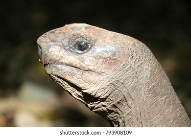 Detail of turtle´s head, Africa