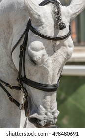 Detail of the head of a purebred Spanish horse