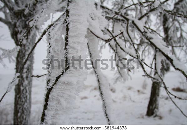 Detail of hoarfrost branch.