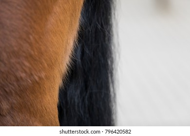 detail of a horse body