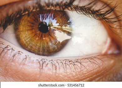 Detail of human eye. Brown colored eye. Close up to retina, cornea, pupil, eyelashes, sclera. Zoom of eye ball. Auto portrait in eye. Macro photography. Vision, perception, light, sense organ.