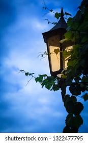 Detail of illuminated nostalgic lantern with climbing plant leaves at dark blue twilight sky background (copy space)