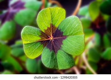 Detail Image of lucky clover with four leaves