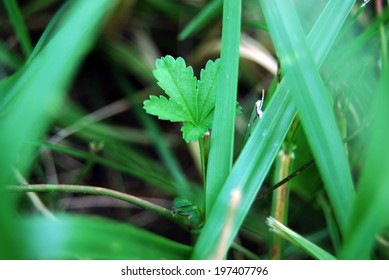 Detail of leaf in the grass