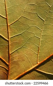 Detail of leaf texture