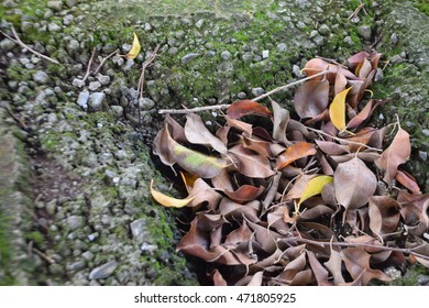 Detail of leaves on the ground