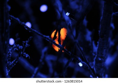Detail of lights in a tree at wintertime.
