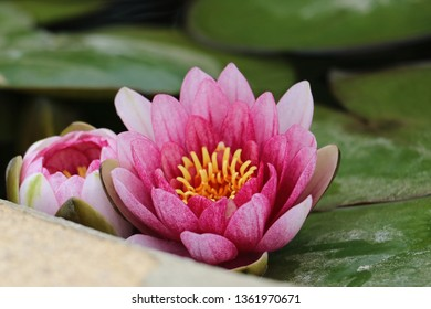 Detail of a lotus flower in a fountain