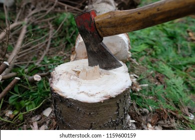 Detail of a lumberjack ax in a freshly felled tree stump