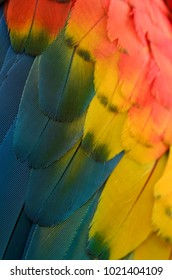Detail of macaw feathers