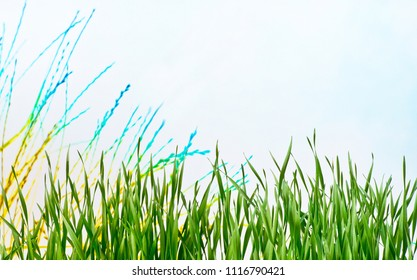 Detail of the meadow in the springtime