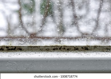 Detail of mold and dirt on the glass of window. Toxic mildew