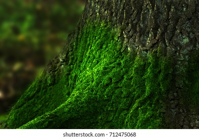 detail moss on the tree on blurred natural background - macro photography