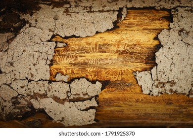 Detail ofa tree bark after being attacked by a bark beetle during a bark beetle calamity, beautiful closeup