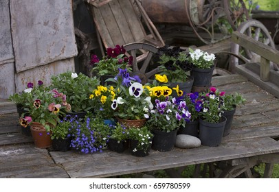 Detail of an old wooden cart with many pots of flowers