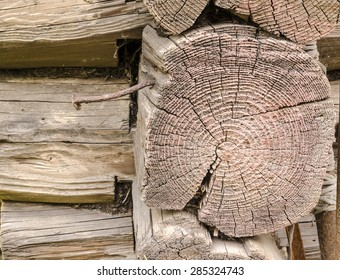 Detail of old wooden log with annual rings. From series backgrounds and textures
