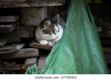 Detail on a white and tabby cat against sitting on a pile of wood with an old fabric in the lower right corner