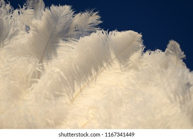 detail of ostrich feathers in a fan.