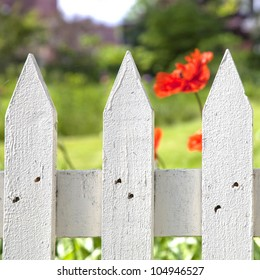 Detail of a painted white picket garden fence with an oriental poppy in the background.