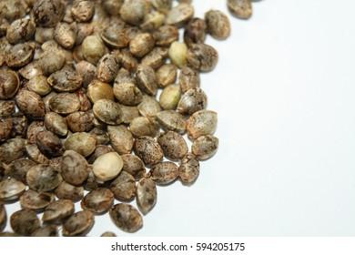 Detail photo of marijuana seeds pile on white background