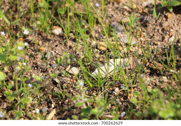 Detail photo of small flying insect (fly) sitting on small rock in the grass