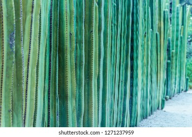 Detail photograph of some green cactus