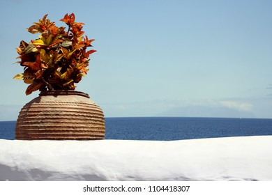 Detail of a plant in a vase with white wall and ocean and blue sky in the background