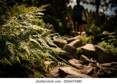 The detail of plants on which the sun shines. - Shutterstock ID 2026475480