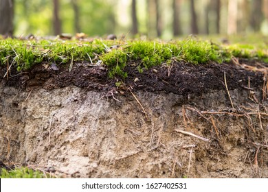detail of a podzol soil with visible topsoil and eluvial layers