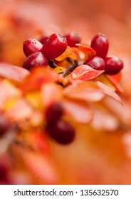 detail of red autumn leaves with fruit