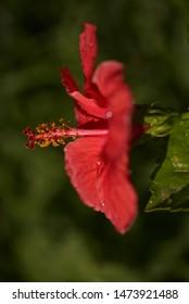 Detail of red flower in bloom