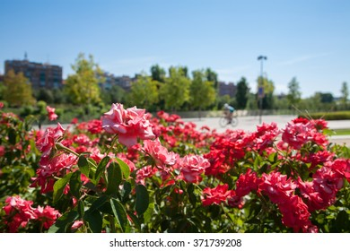 detail in red flowers and green plants in park and sport people cycling and running jogging urban at the bottom with buildings in Madrid city Spain Europe