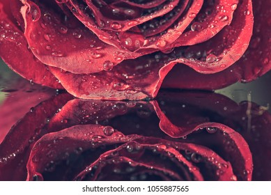 Detail of a red rose on a dark, reflective surface. The petals have droplets.