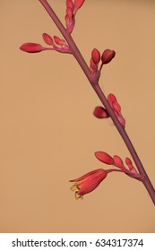 Detail of red yucca flowers against a warm yellow background.