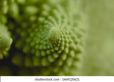 Detail of romanesco broccoli logarithmic spirals