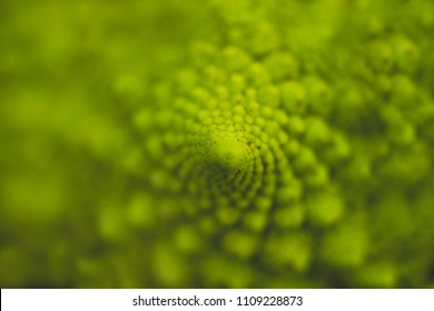 Detail of romanesque cauliflower geometrical logarithmic spirals