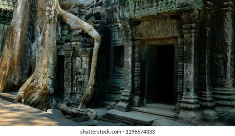 Detail of roots growing in the middle of wall in Angkor wat ,archaeologic park ,Cambodia