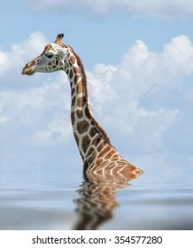 detail of a Rothschild Giraffe on reflective water surface