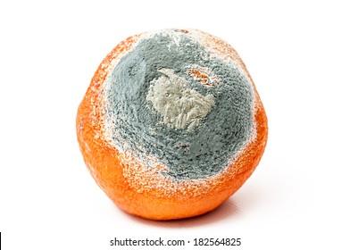 Detail of a rotten orange