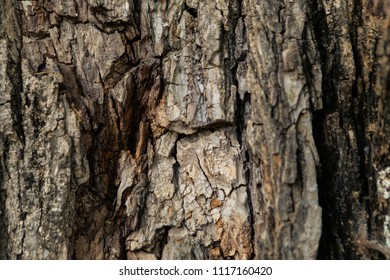 Detail of a rough and thick tree trunk