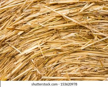 Detail of a round bale  with straw and ears