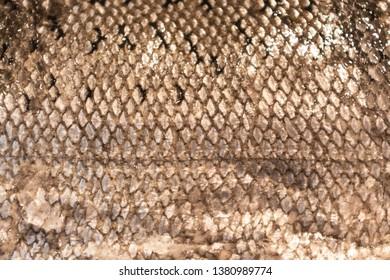 Detail of Scaley Fish Skin Horizontal Background Image