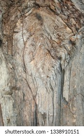 detail of a scarred tree