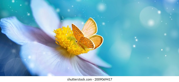 Detail with shallow focus of white anemone flower with yellow stamens and butterfly in nature macro on background of blue sky with beautiful bokeh. Delicate artistic image of beauty of nature. - Shutterstock ID 2009069417