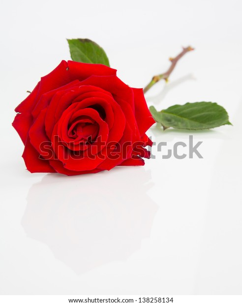 A detail shot of a beautiful red rose on a white background.