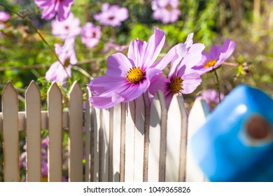Detail of small nostalgic miniature garden fence with big Cosmea flower and rusty pot upside down on top